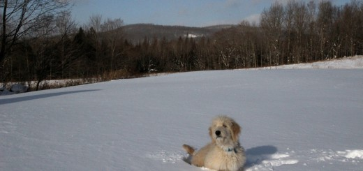 IMG_1308-django-snow
