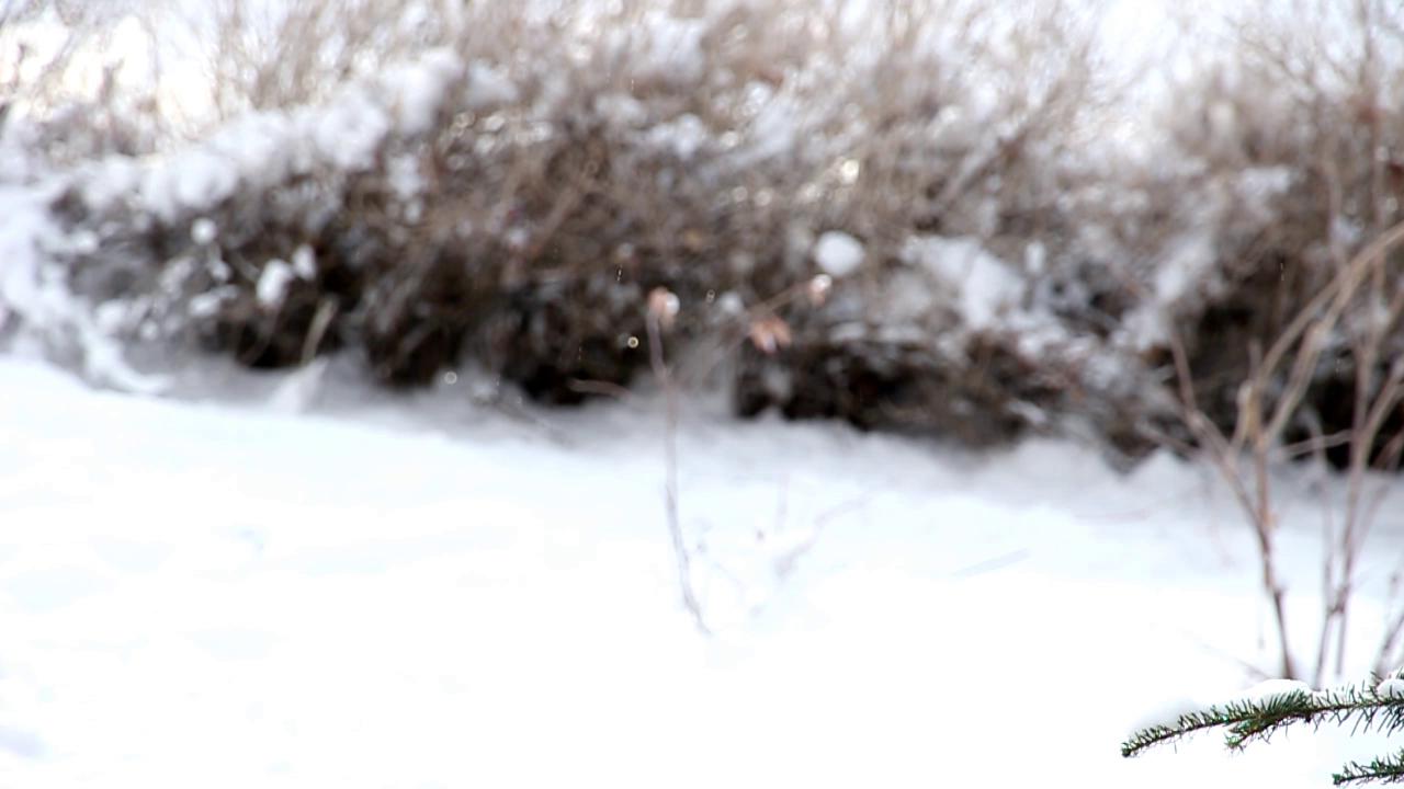 vlcsnap-2013-12-04-23h04m10s41